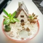 Minyatür Bahçe-Terrarium